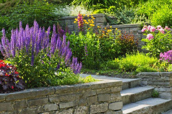 Rose-Galabau-Gartenbau-Landschaftsbau-private-gaerten-Gartenpflege-muenster